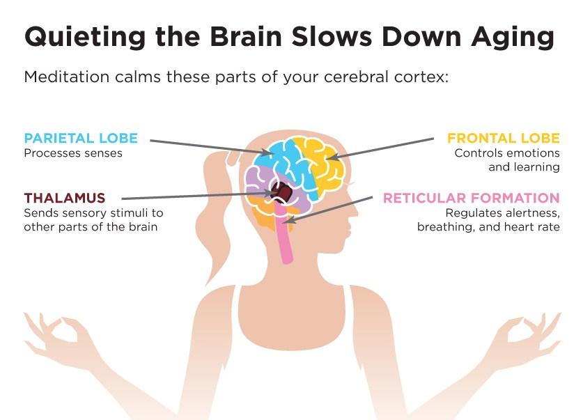 meditation_brain.jpg